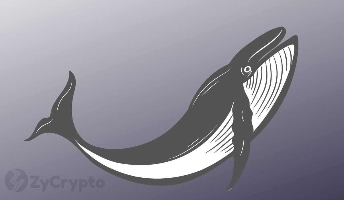 Whales Are Responsible For Bitcoin's Latest Rally, NOT China: Peter Schiff