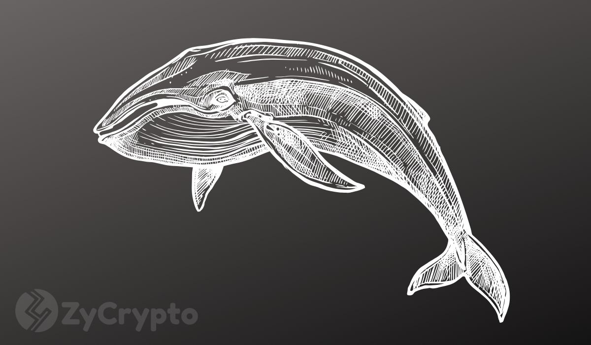 Bitcoin Whale Numbers Hit 2-Year Record as Pre-Halving Accumulation Skyrockets