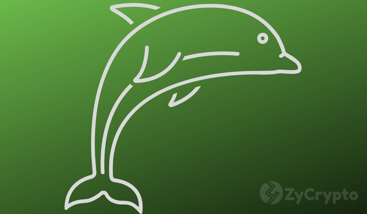Ethereum Whale Addresses Hit 10-Month High, Signaling Growing Enthusiasm