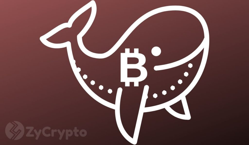 Bitcoin Whales Initiated Bear Move By Dumping Their Coins Onto GBTC Speculators — Peter Schiff