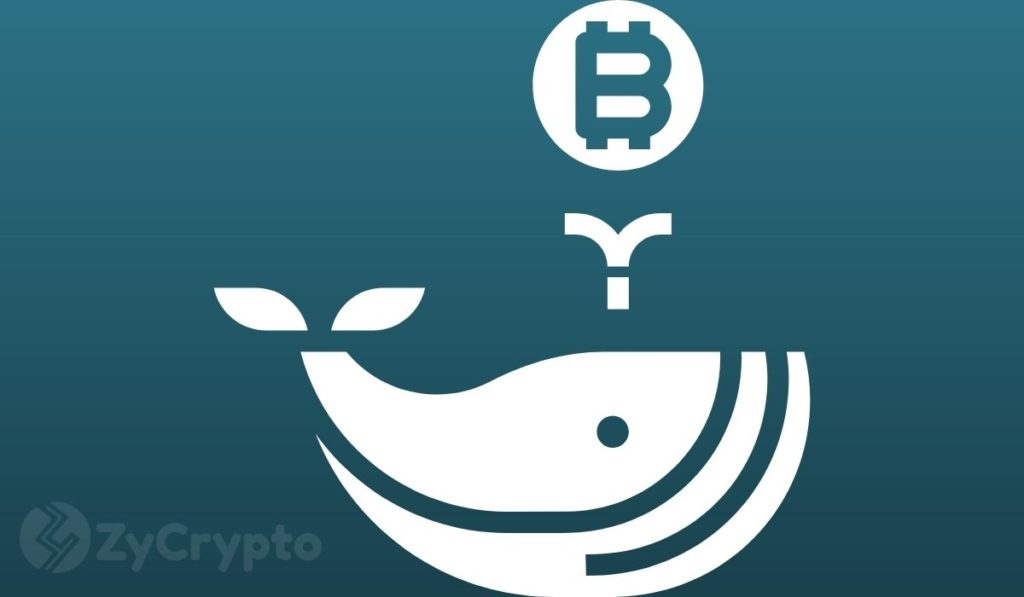 """Whales Are """"Gobbling Up"""" Bitcoin Even With The Recent Market Slump"""