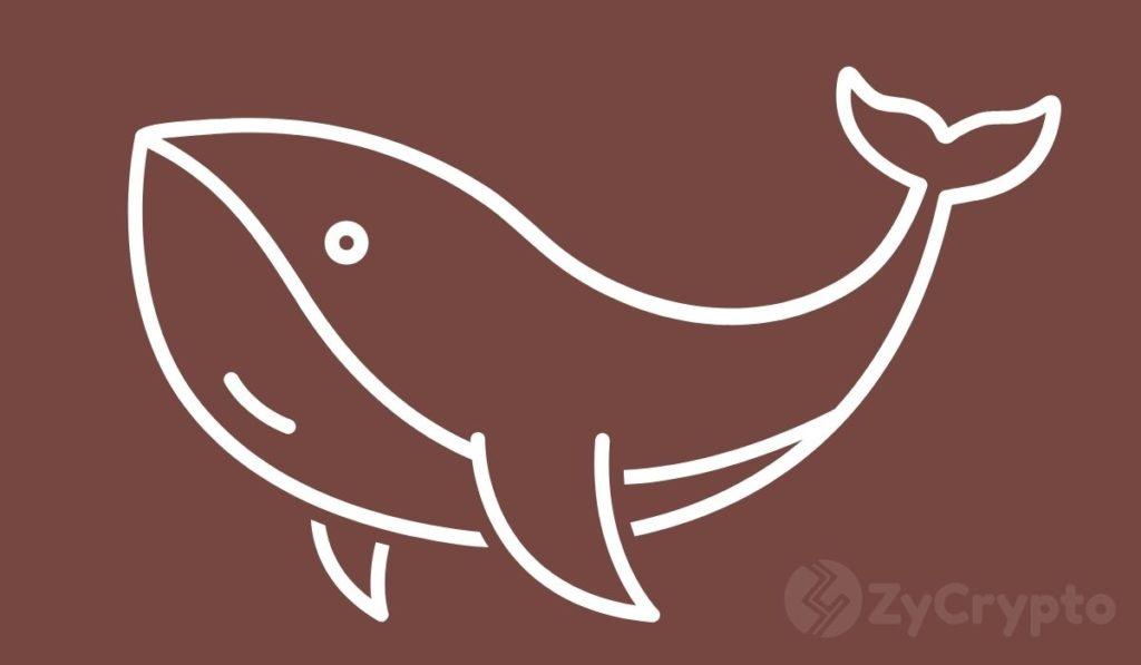 Is Robinhood The Largest Dogecoin Whale? Elon Musk Thinks So